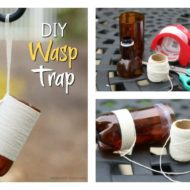 DIY Wasp Trap: All-Natural Solution